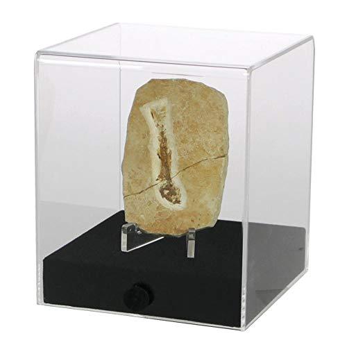 Acryl-Vitrine ''cube'' 12 x 12 x 14 cm