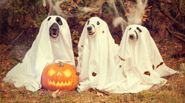 Beleuchteter Kürbis mit Halloween Hunden